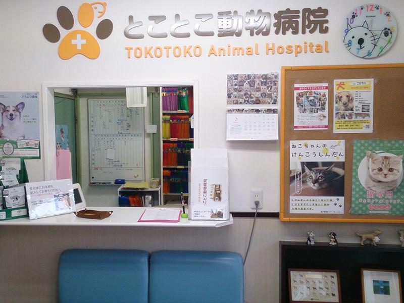 千葉市 都賀駅徒歩5分の動物病院 とことこ動物病院