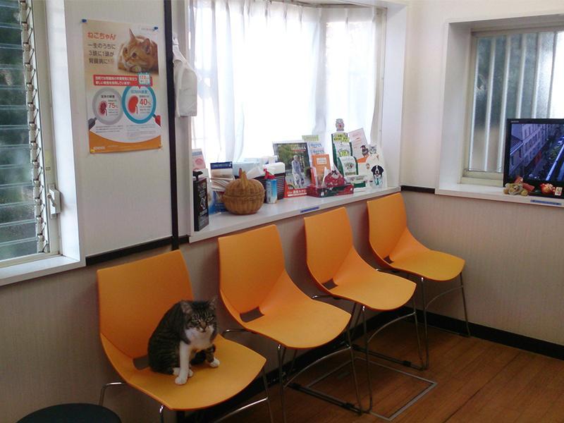 とことこ動物病院の対象動物は犬と猫です