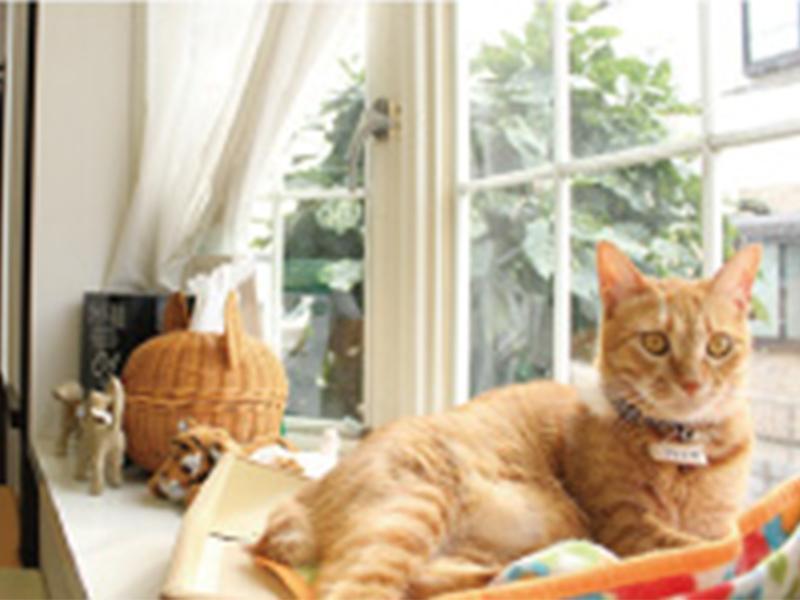 とことこ動物病院 看板猫:ジュニア
