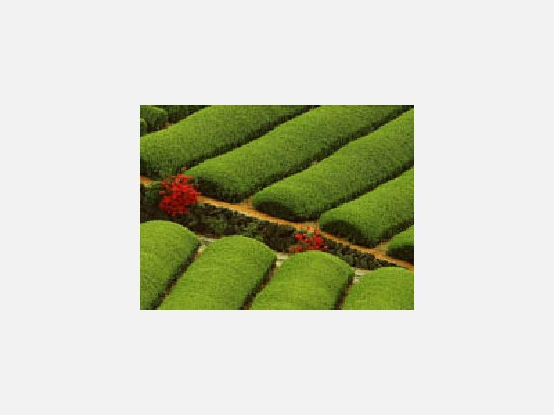 自社農園工場で研究開発しハラダの緑茶は国産100%