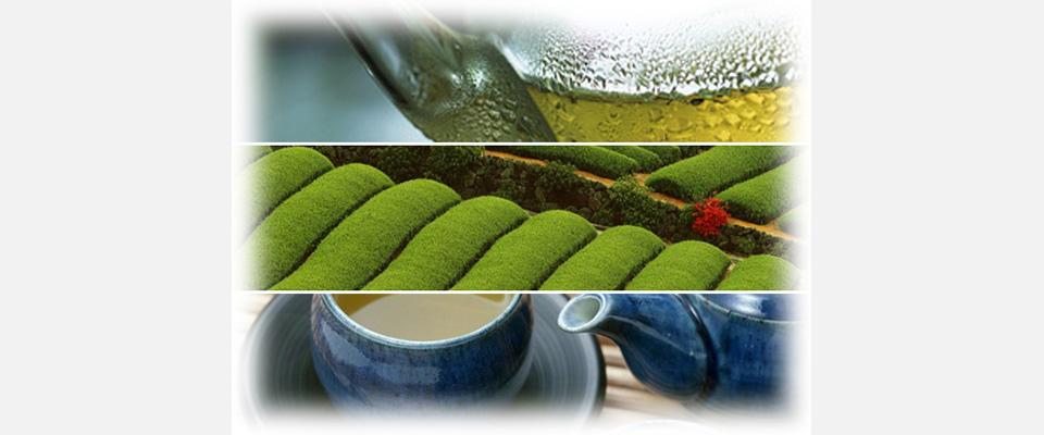 小売店、製茶・お茶メーカーへの製茶はハラダ製茶株式