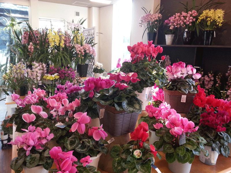 鉢花も各種ございます