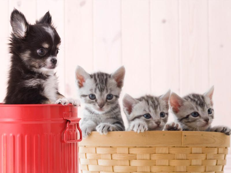 子犬や子猫を迎えたら健康の為に