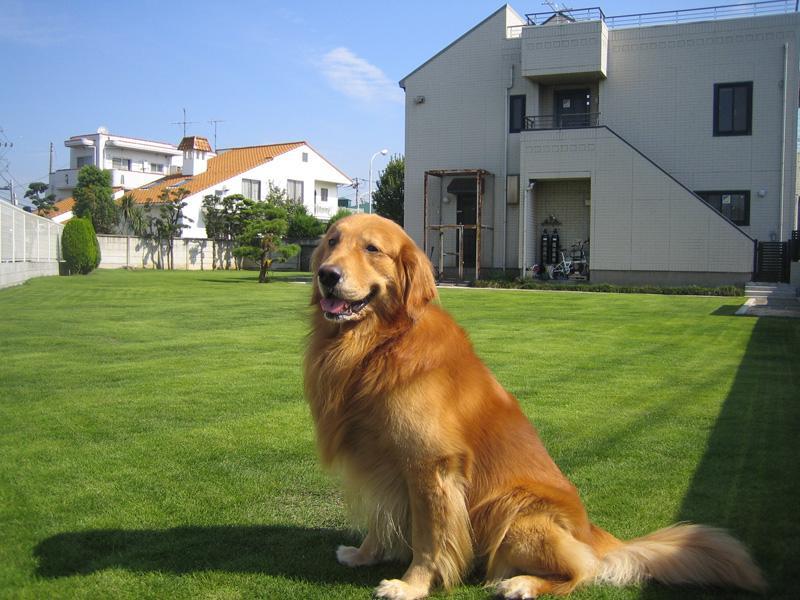 飼い主様と愛犬がノーリードで遊べる天然芝ドッグラン