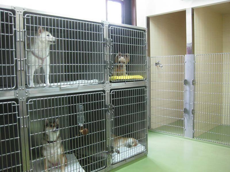 犬・猫別々の入院施設なので安心安全です