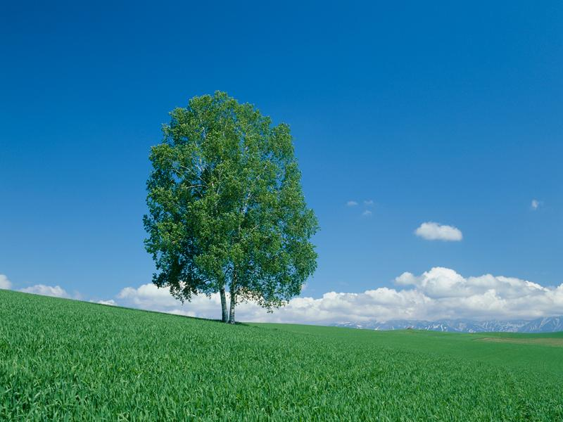 不安の種を取り除き生きるエネルギーを取り戻す気功