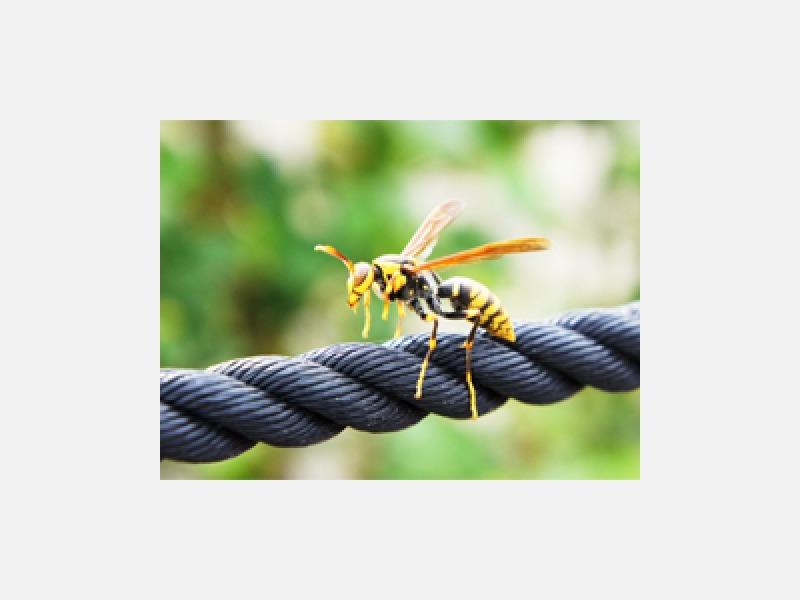 ハチ駆除専門  ハチ駆除専門のプロに安心してお任せを