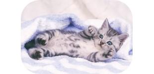 キティ猫専門店ロゴ