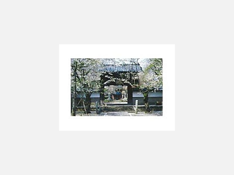 大門の桜並木