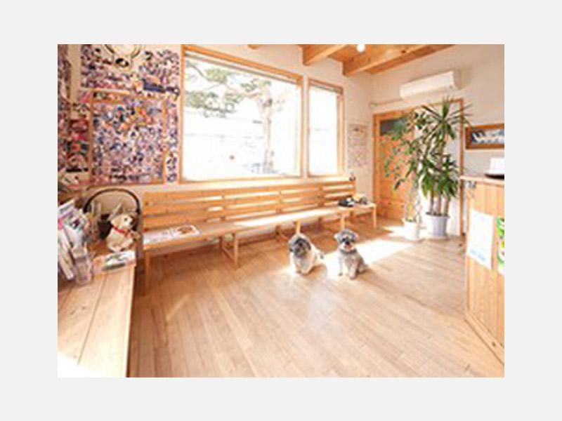 動物達が舐めても安全 全床無塗装の無垢の木の待合室
