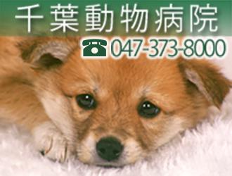 千葉動物病院ロゴ