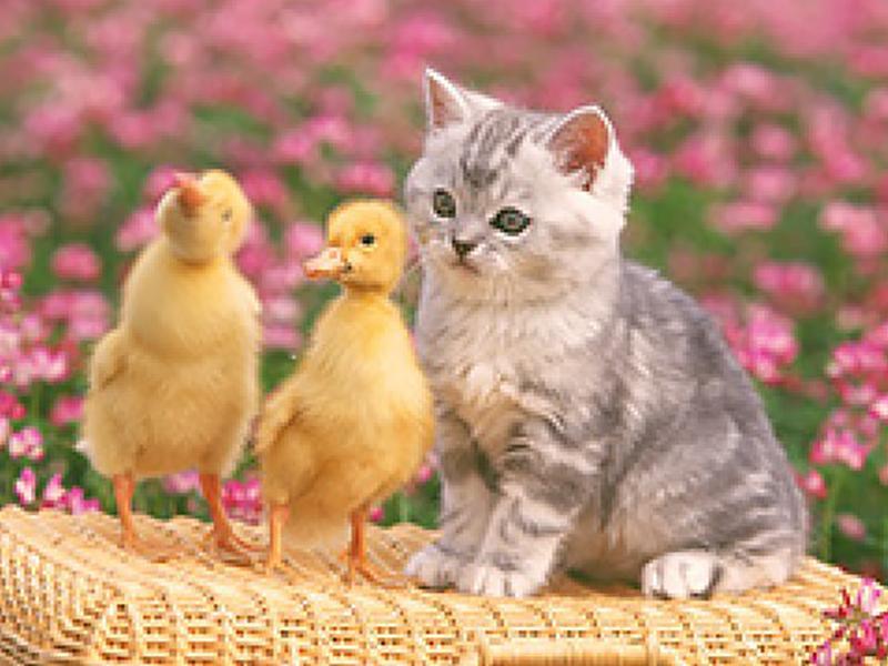 診療対象動物◆犬・猫・鳥・小動物