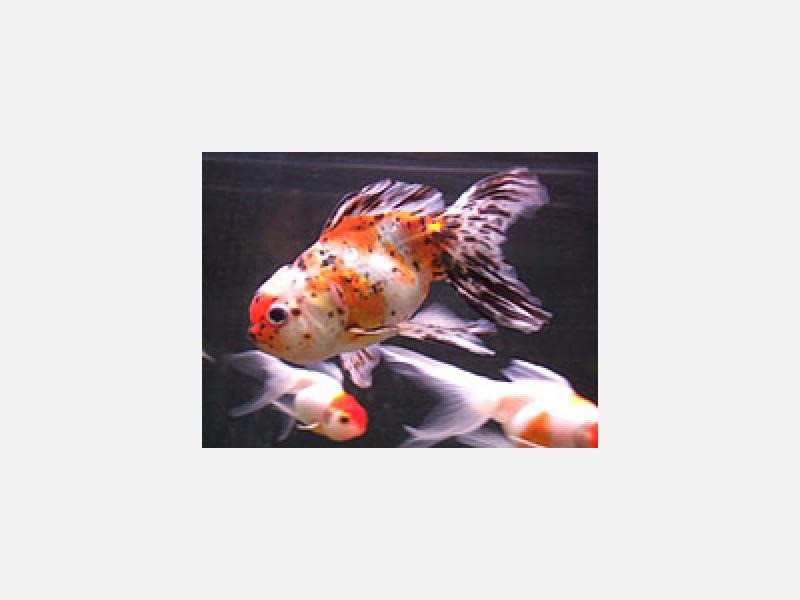 熱帯魚・海水魚・無脊椎・釣り堀・その他
