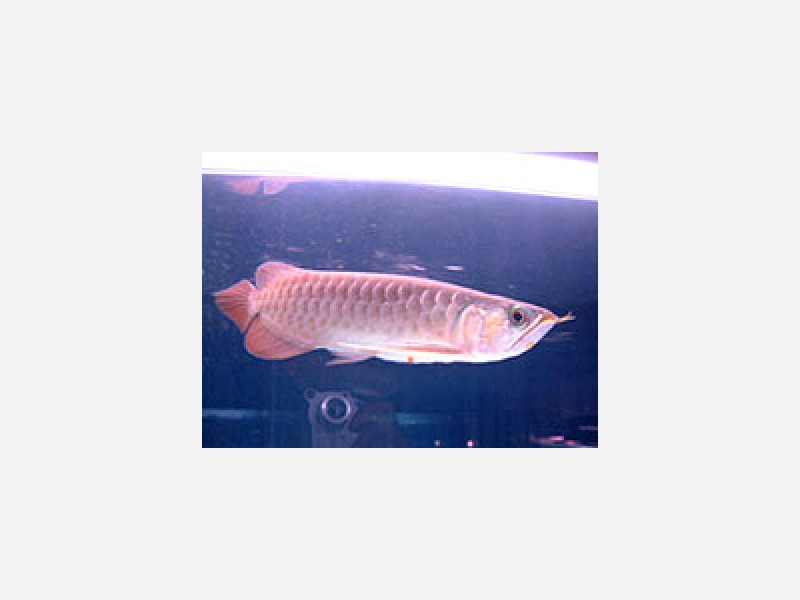 熱帯魚水槽セット、各サイズで特価販売中!