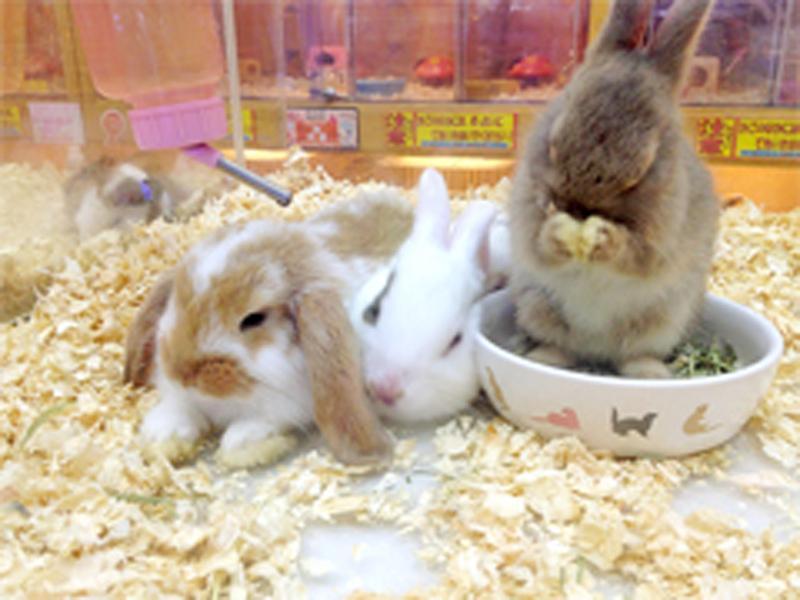 ハムスター・ウサギはもちろん