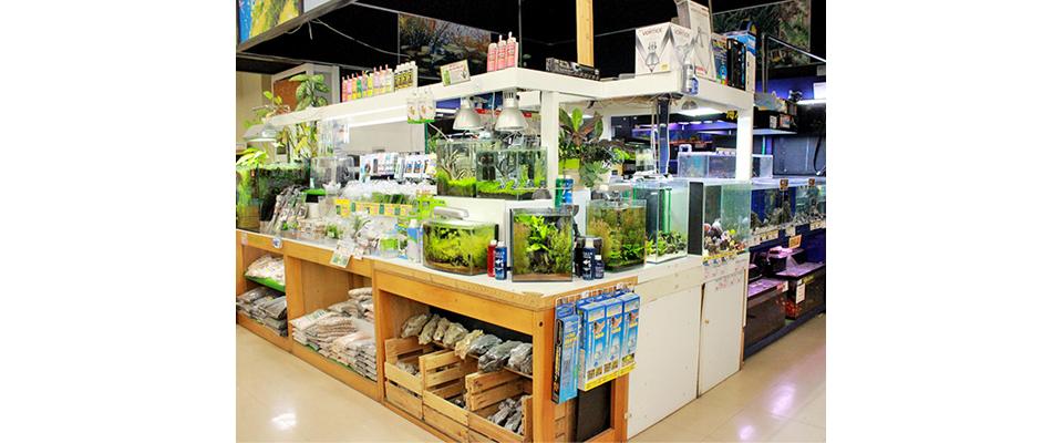 弘前市 熱帯魚店 サンアクア弘前安原店