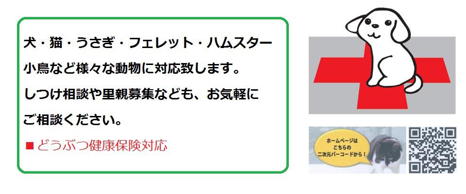 広島市南区で動物病院をお探しならパル動物病院へ