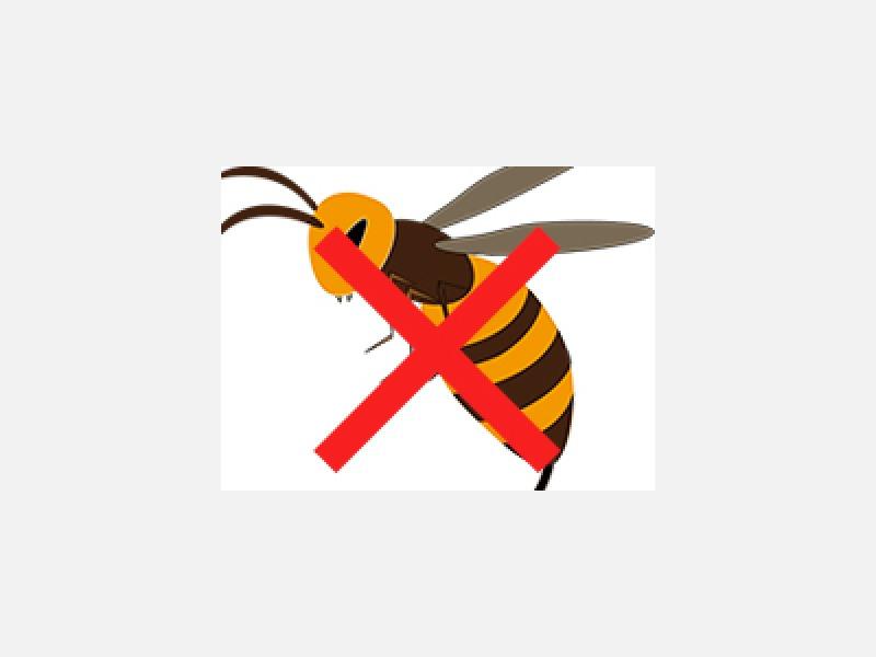 スズメバチ・アシナガバチ駆除