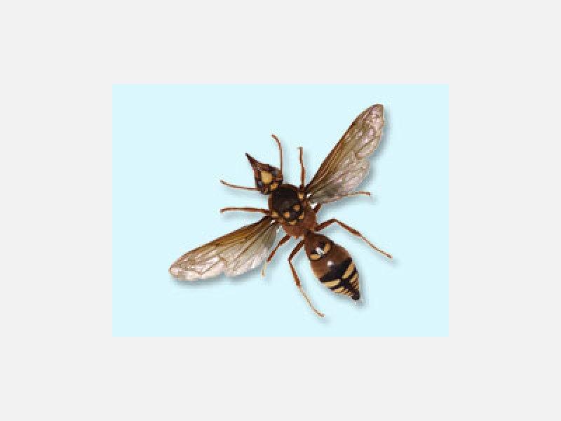 ハチでお困りではありませんか?