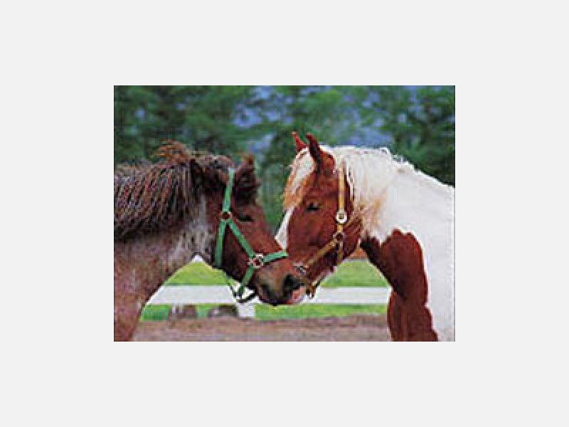 乗馬体験できます