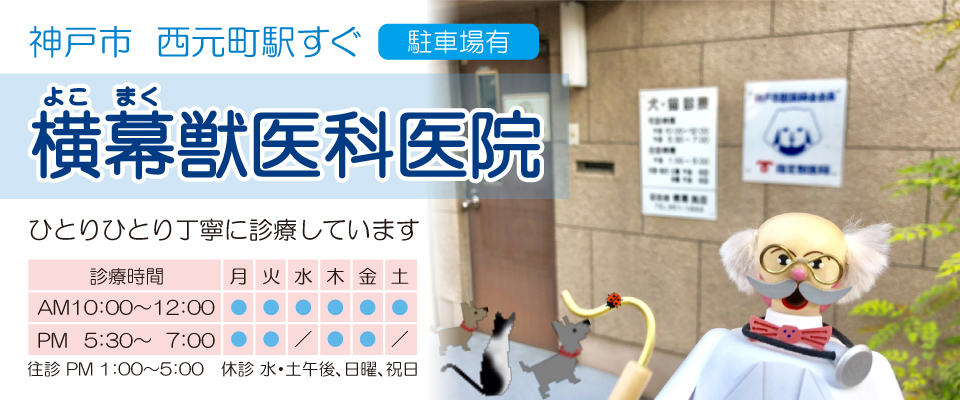 神戸市 西元町駅すぐ 横幕獣医科医院 駐車場有