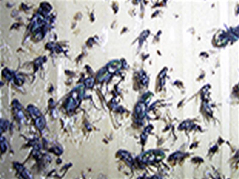 KS40W捕虫器での飛翔性昆虫類捕獲状況