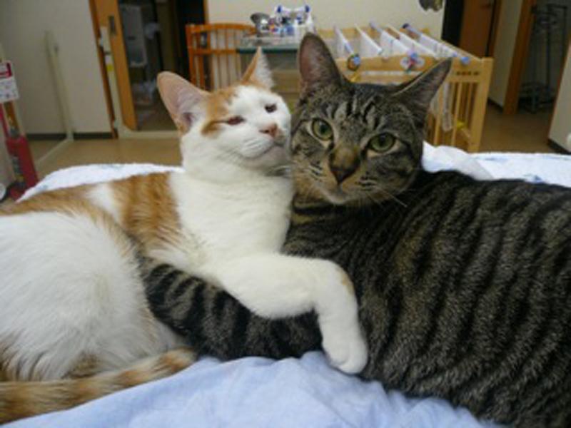 """""""院内ではネコたちがのんびりしています"""""""