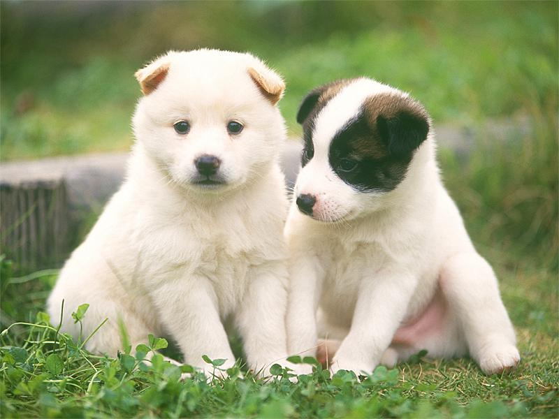 犬、猫、ペットの健康管理・相談