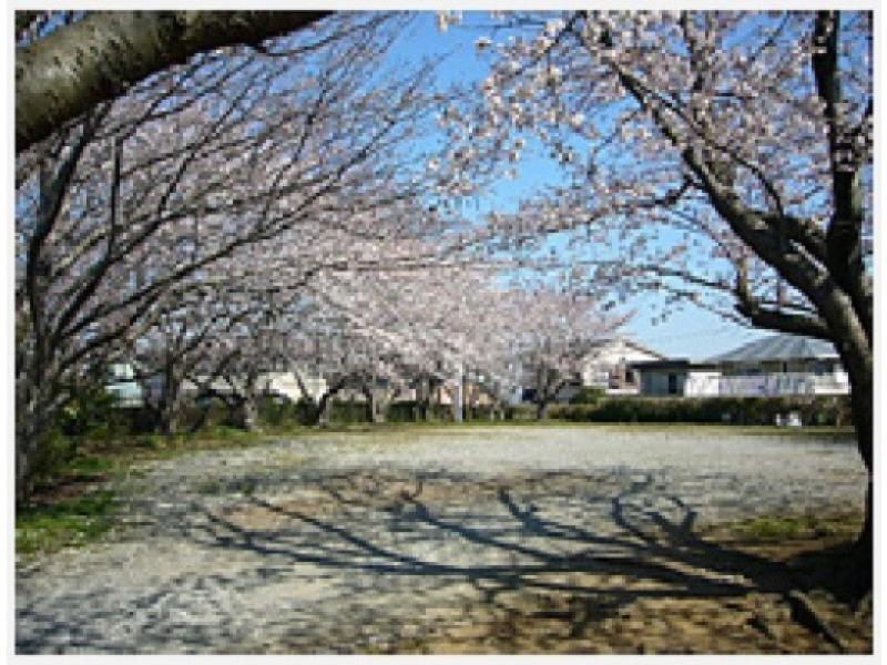 境内駐車場 春には桜が満開