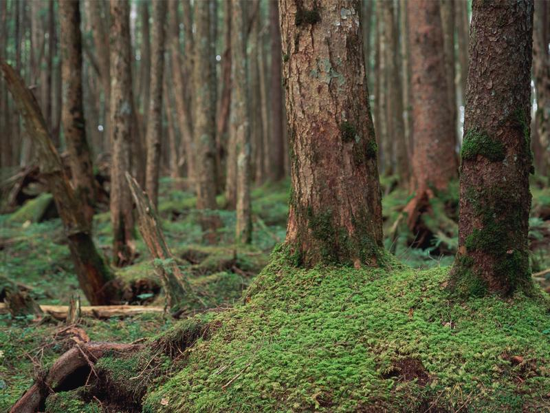 建材は杉材を95%使用しております