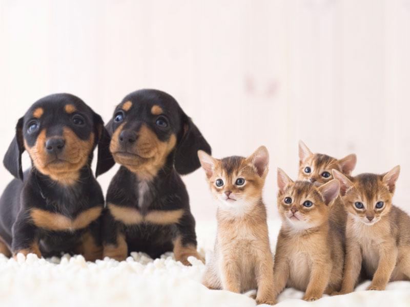 ◆ペット保険取扱(anicom)