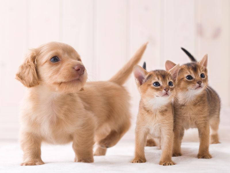 ◆飼育、しつけに関する相談