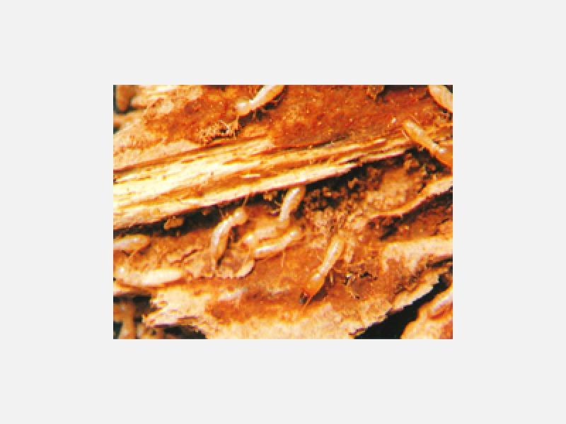 白蟻被害を防ぐ最適な施工を行います!