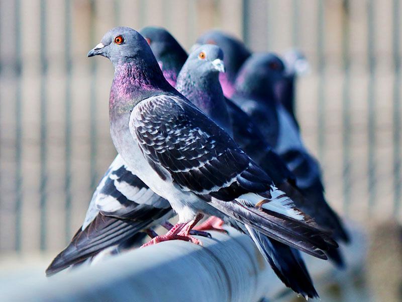 ハト等鳥が来なくなる安全な忌避剤の施工をおすすめしています