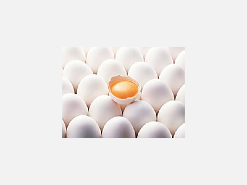 業務用・小売用鶏卵