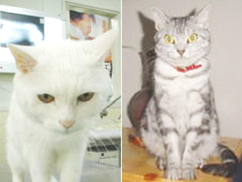 (左)小笠原 レオ/(右)小笠原 アンディー