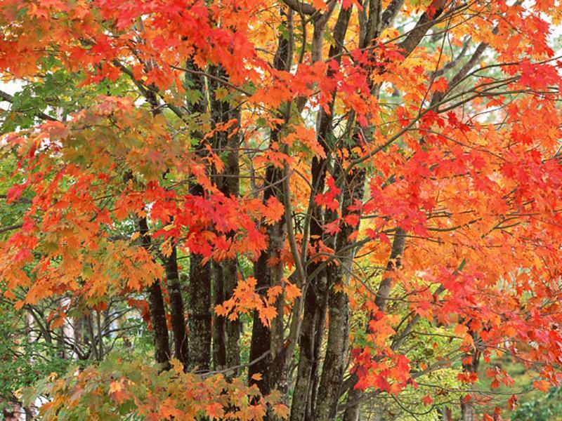 秋は紅葉が楽しめます。見頃は、11月25日前後です