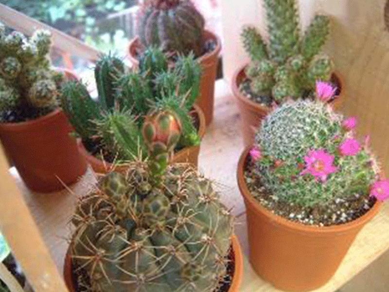 観葉植物、サボテンもいっぱい!