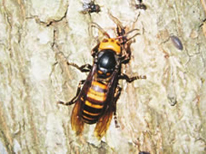 ハチ、ハチの巣駆除