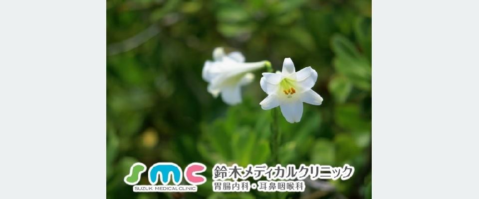 戸田市胃腸内科耳鼻咽喉科の鈴木メディカルクリニック