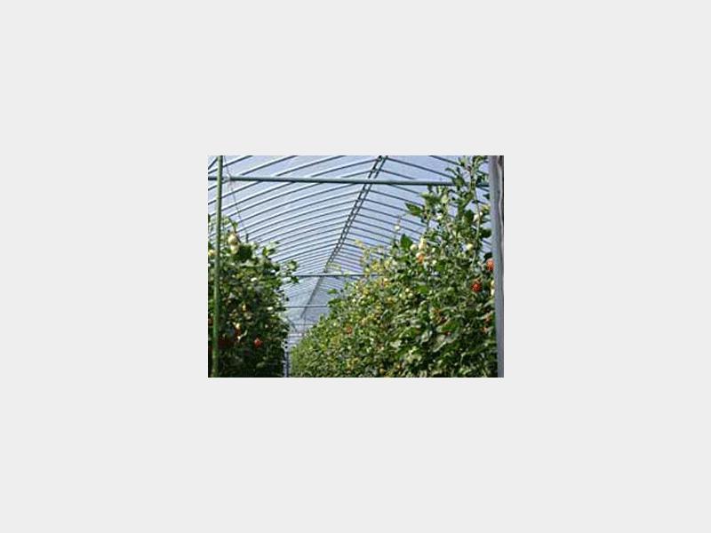 トマト栽培ハウス(金沢)