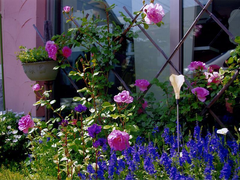 店前5月の花々