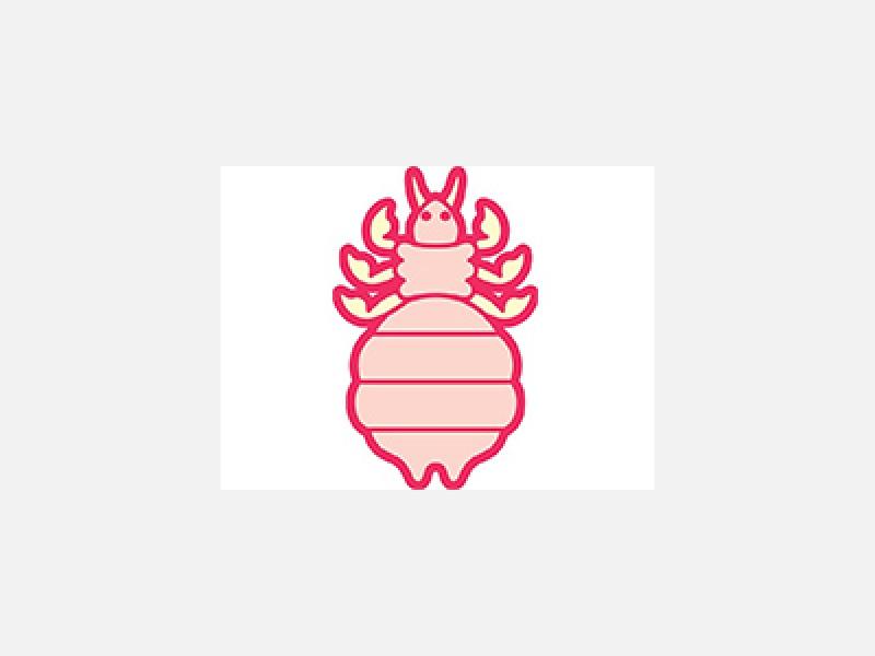 松戸市のノミ・ダニ等の害虫駆除はトキワ消毒有限会社へ