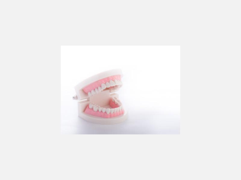 歯周病に関するご相談、歯の健康診断