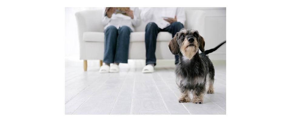 犬や猫ペットの病院 みゆき動物病院
