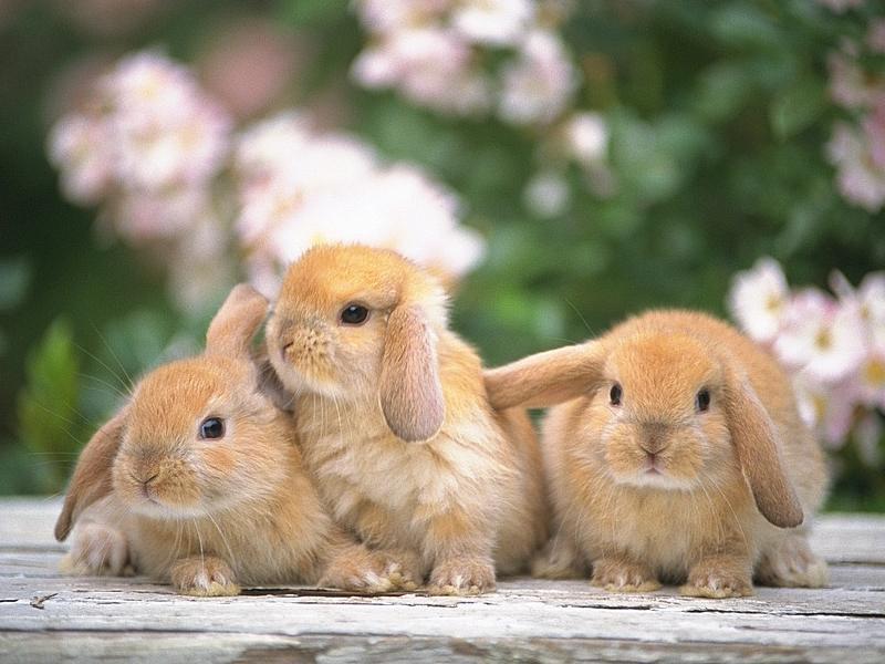 ウサギの診察